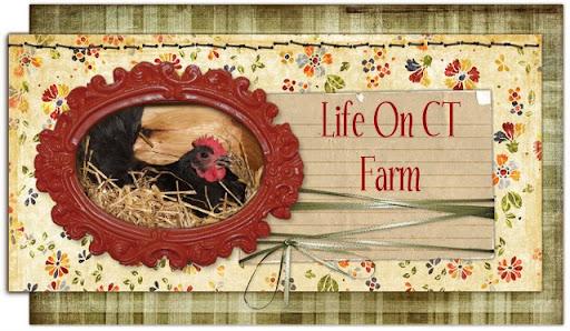 Life On CT Farm