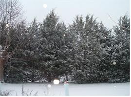 Carolina snow 2010