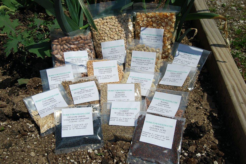 sweet corn planting instructions