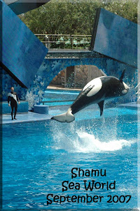 Shamu at Sea World Orlando