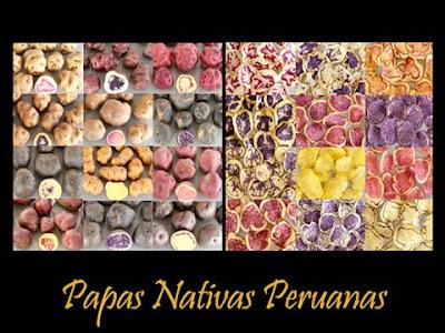 variedad papa: