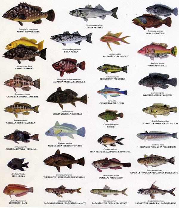 fotos peces comestibles:
