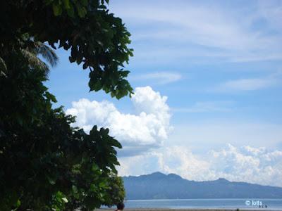 skywatch, beach tree