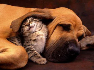 cat and dog bestfriends