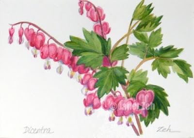 Dicentra,Bleeding Hearts watercolor botanical painting