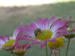 No te marchites flor preciosa