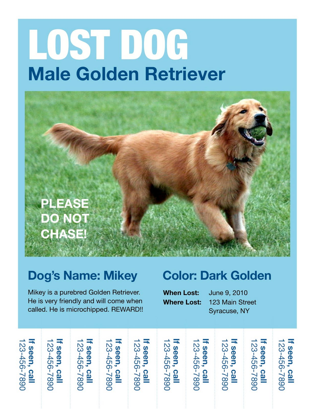 What To Do If Your Dog Goes Missing Sample Flyer