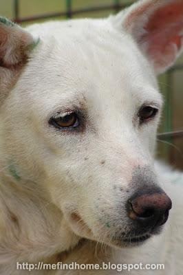 Adopt a shelter dog! Adopt Jasmine!