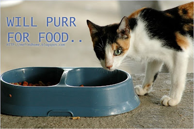 Shelter cats need cat food donations!