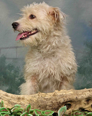 Shelter dog Missy looking for her forever home! Adopt Missy!