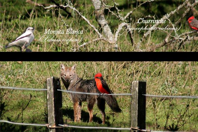 Octubre - Mes de las Aves