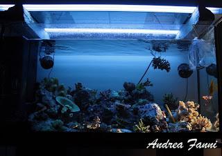 acquario reef