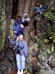 Tremblay's in the Redwood Forest