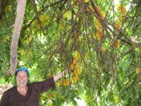 Me picking starfruit