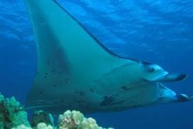 Aumentan las especies en peligro de extinción