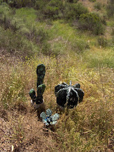 Cacti sculptures released into the wild.