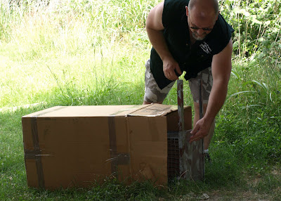homemade coon traps