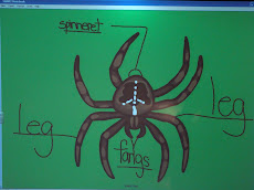 Diagram of a Spider