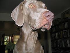 My granddog, Max