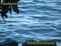 PaluRoma FotoArte