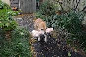 Minka the DOG
