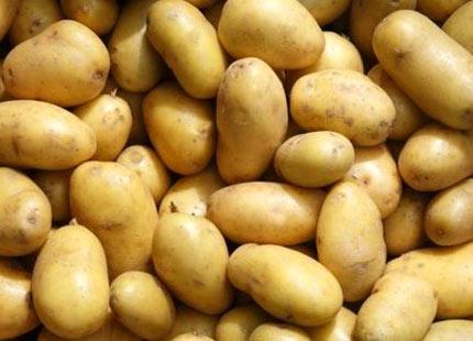 http://2.bp.blogspot.com/_QCGlBqM0Ybo/TEV1WKeOxwI/AAAAAAAADmU/ijiC0uudIyM/s1600/potatis-s%25E4ttpotatis-slottstr%25E4dg%25E5rden-ulriksdal.jpg