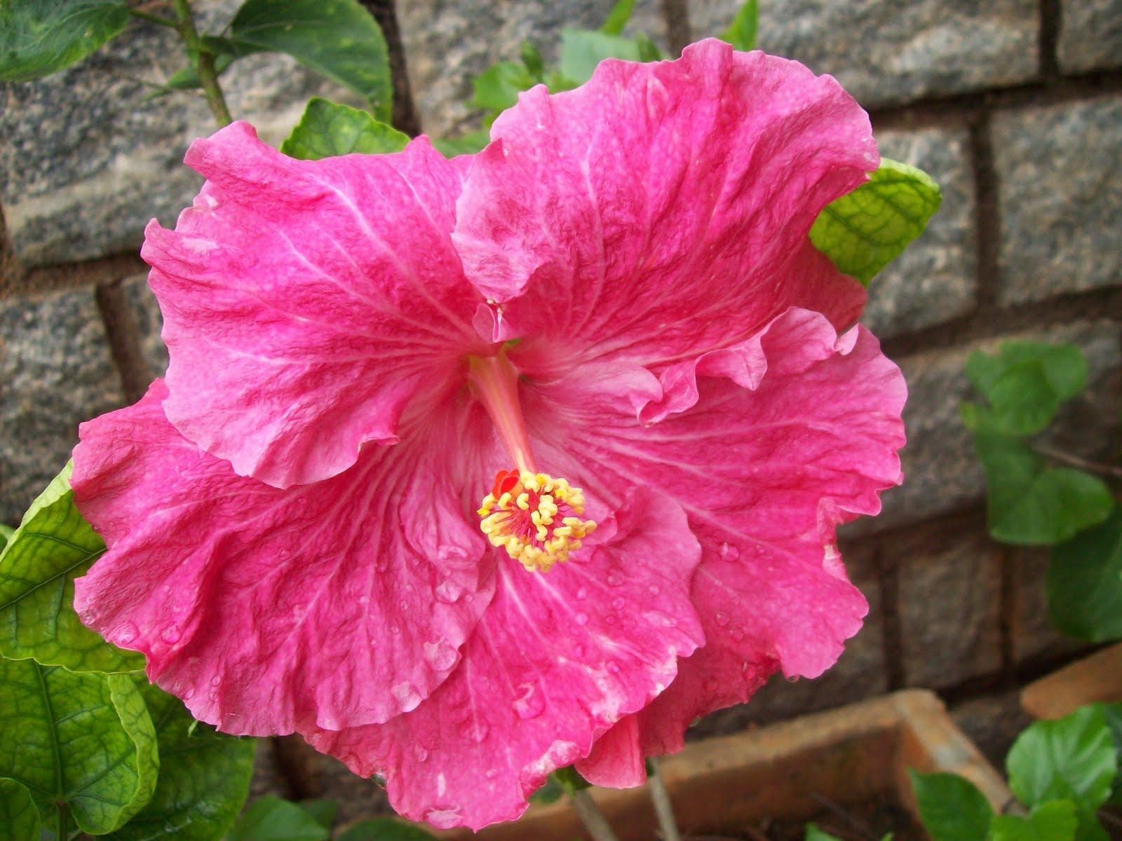 Gardentropics Todays Flowers Big Flowers