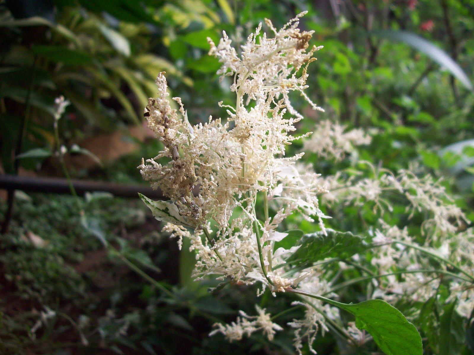 Gardentropics todays flowers 128 gardentropics mightylinksfo