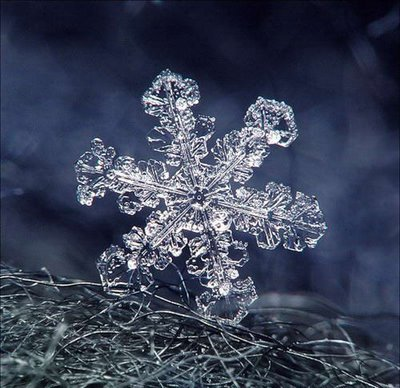 Artistic Snowflake Shapes 2