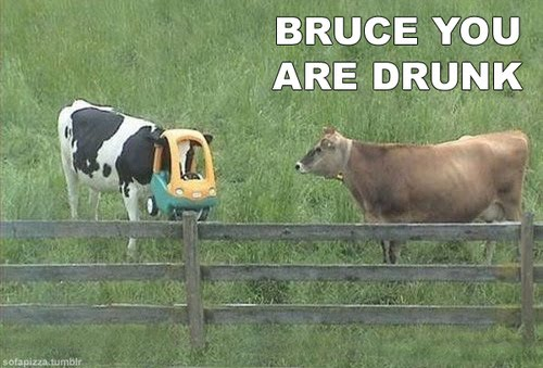 Bruce You Are Drunk Bro
