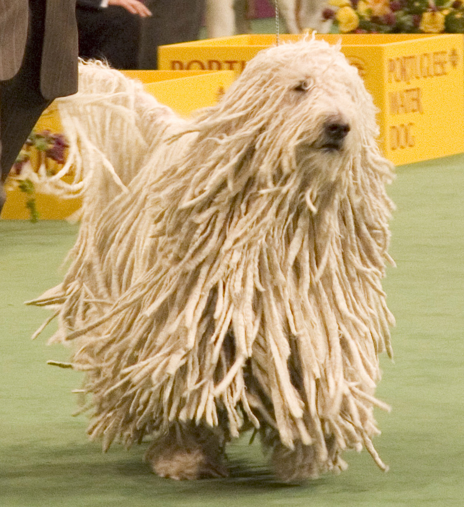 dog show pictures