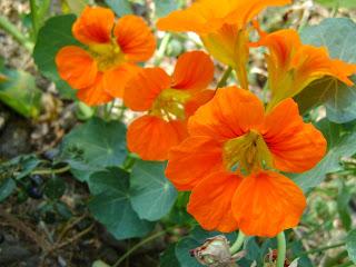 Plantas medicinales formulas herbolarias shampoo para for Jardin botanico medicinal