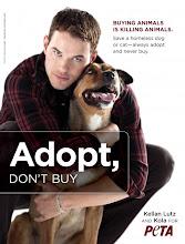 Mascotas en Adopción en Europa