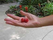 Fruto do Mato