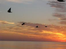 Na imagem do nascer do sol desta quarta-feira, 9 de abril, a beleza singular  da Costa Doce.