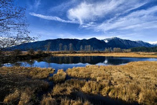 Addington Marsh, Maple Ridge, BC, Canada