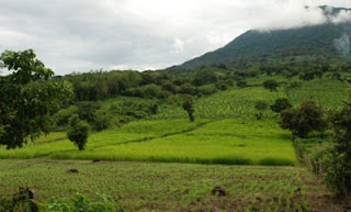 rice fields in Nicaragua, Central America