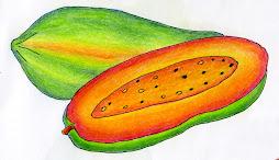 ฝึกวาดภาพผลไม้