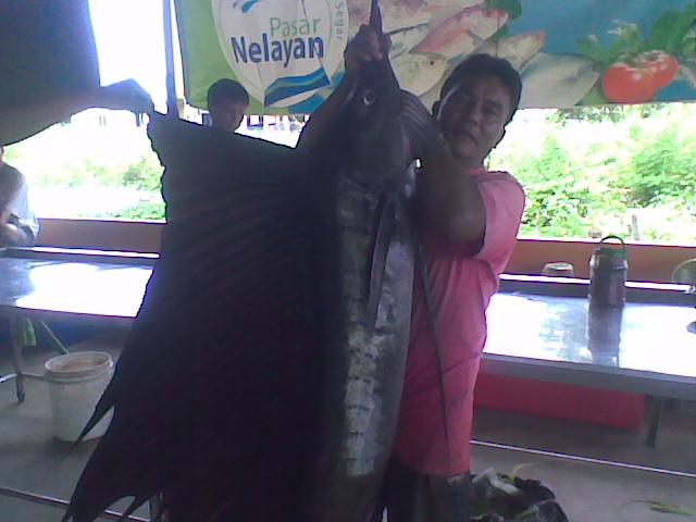Layaran 32 kg