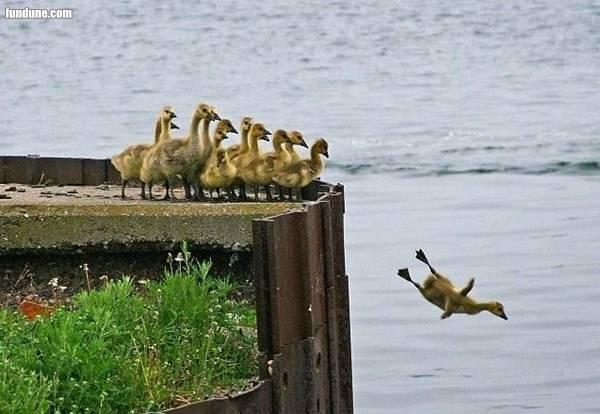 duck flies