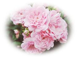 Ich liebe Rosen!