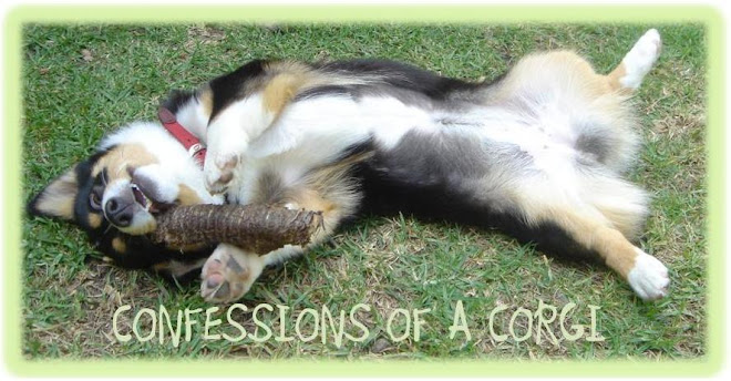 Confessions of a Corgi