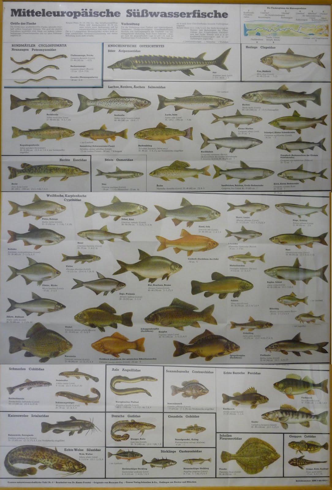 how to pick fresh fish