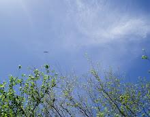 vuelo alto