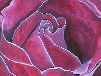 rosa rosae detalle