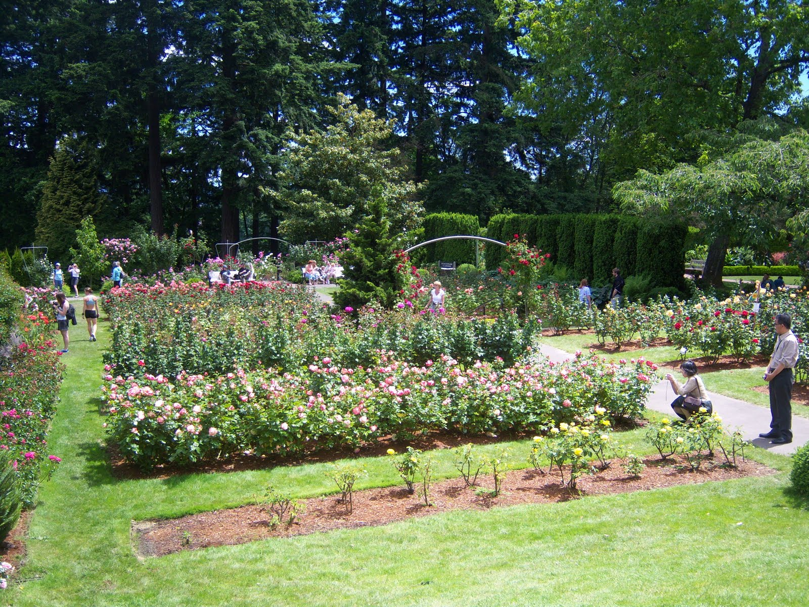 Most Beautiful Rose Gardens In The World searching for rosebud: the most beautiful rose garden in the world