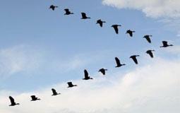 Pelajaran Dari Bangsa Burung