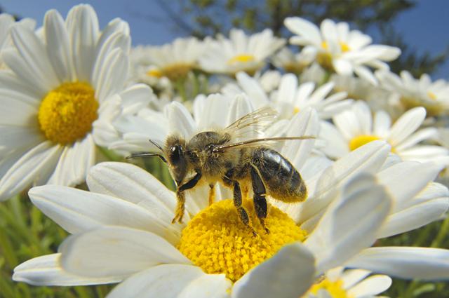 Atalaya de arousa salvemos las abejas