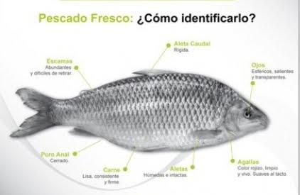 pescados y mariscos caracter sticas del pescado fresco
