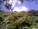 Arboles en la barranca del tigre en Iramuco, Gto
